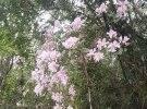 满山遍野的杜鹃花