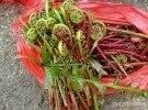今年吃过这种野菜吗