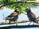 它们在吵什么?