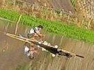 大埔河里有人撒网捕鱼