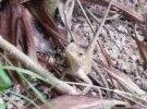 西湖公园发现蜥蜴