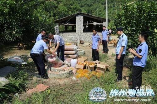 大埔警方销毁不符合安全标准的花生油及原材料一批