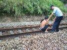 大埔男子赤膊铁路上练歌