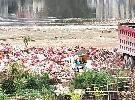 高陂垃圾场堆积成山